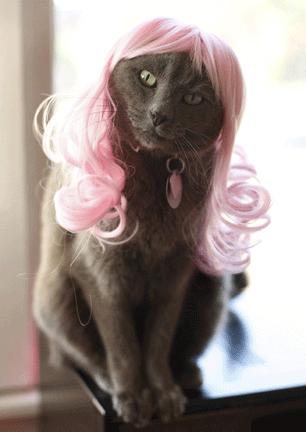 """Смешные коты  """" Развлечения Ивана!"""