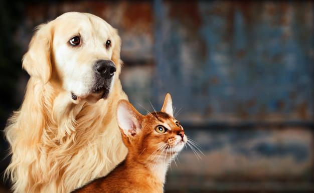 Фото: София Мачульская: настоящая женщина - всегда кошка