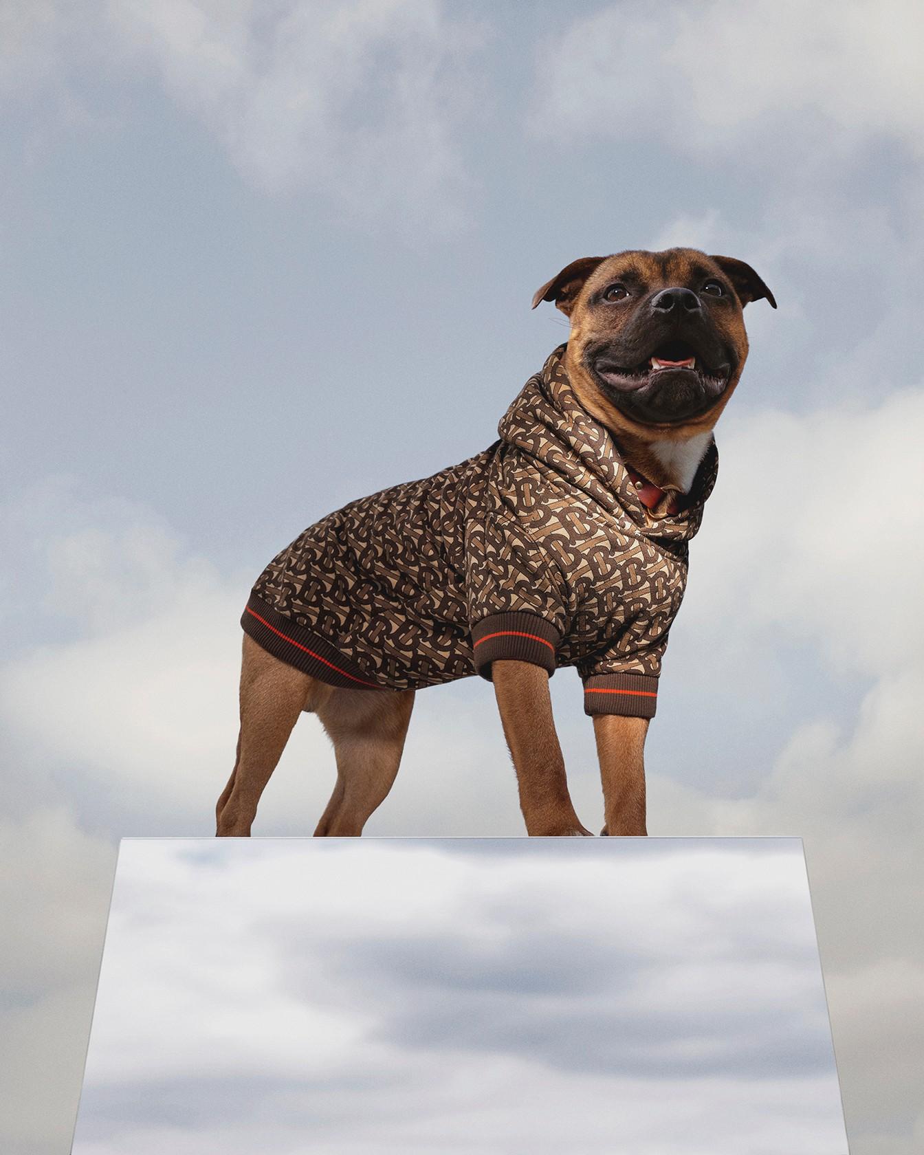 Фото: Burberry создали идеальный свитшот для вашей собаки
