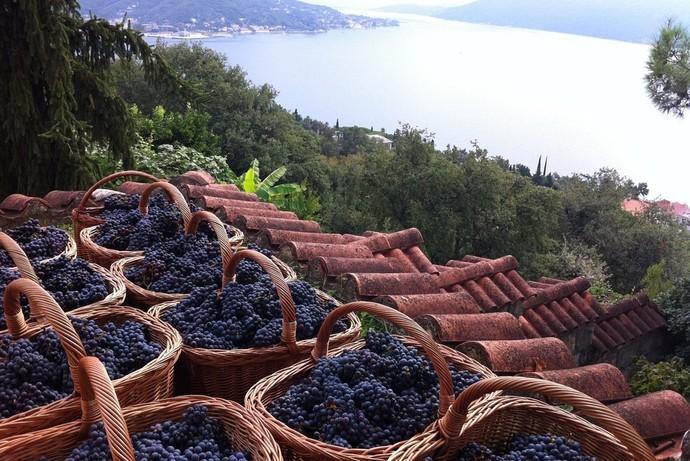 Отель Regent Porto Montenegro запустил винно-гастрономический тур