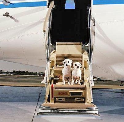 норма перевозки багажа